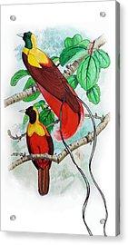 The Birds Of Paradise Acrylic Print by Mayur Sharma