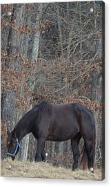 Acrylic Print featuring the photograph The Black by Maria Urso