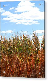 Acrylic Print featuring the photograph The Bloody Cornfield by Debra Kaye McKrill