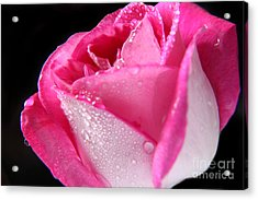 The Bloom Acrylic Print