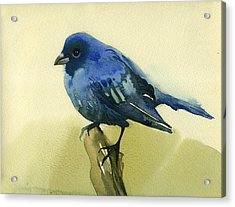 The Blue Birdie Acrylic Print by Tatiana Zubareva