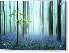 The Blue Forest ........ Acrylic Print