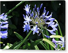 The Blue Acrylic Print by Ivete Basso Photography