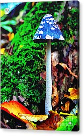 The Blue Mushroom Acrylic Print by Odon Czintos