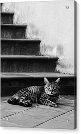 The Boss Acrylic Print