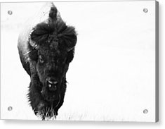 The Boss Acrylic Print by Michele Richter