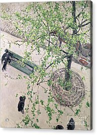 The Boulevard Viewed From Above Acrylic Print by Gustave Caillebotte