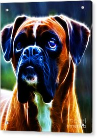 The Boxer - Electric Acrylic Print by Wingsdomain Art and Photography