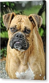 The Boxer Acrylic Print by Kenny Francis