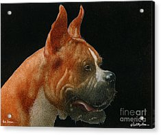 The Boxer... Acrylic Print by Will Bullas