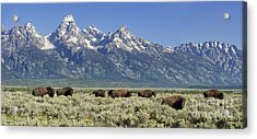The Boys Club Of Grand Teton Acrylic Print by Sandra Bronstein