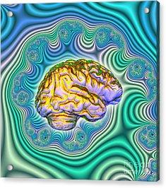The Brain Acrylic Print by Dennis D. Potokar