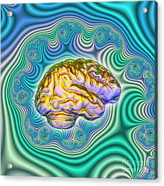 The Brain Acrylic Print