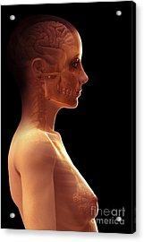The Brain Female Acrylic Print