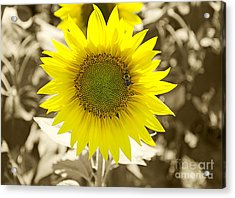 The Brightest In The Bunch Acrylic Print by John Debar
