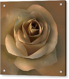 The Bronze Rose Flower Acrylic Print by Jennie Marie Schell