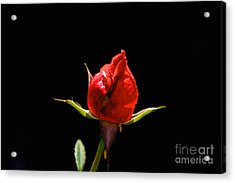 The Bud Acrylic Print