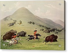 The Buffalo Hunt Acrylic Print by George Catlin