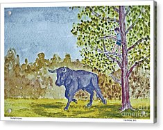 The Bull Is Loose Acrylic Print by Fred Jinkins