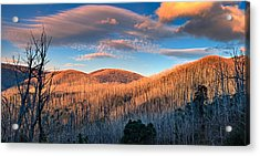 The Burnt Forest Acrylic Print by Mark Lucey
