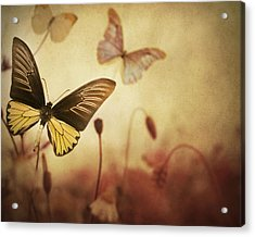 The Butterfly Garden Acrylic Print by Irene Suchocki
