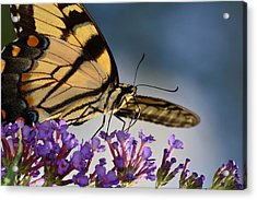 The Butterfly Acrylic Print by Lori Tambakis