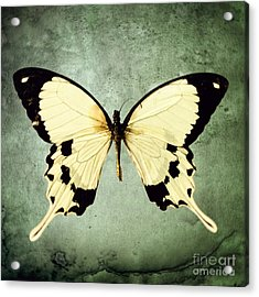 The Butterfly Project 1 Acrylic Print by Diane Miller