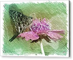 The Butterfly Visitor Acrylic Print by Carol Groenen