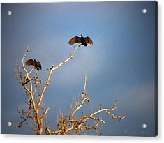 The Buzzard Roost Acrylic Print