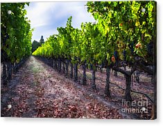 The Cabernet Is Ready Acrylic Print by George Oze