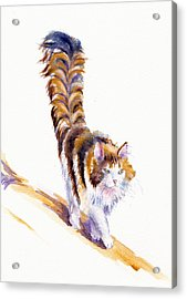 The Calico Cat That Walked By Himself Acrylic Print