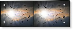 The Call - The Caw - Gently Cross Your Eyes And Focus On The Middle Image Acrylic Print