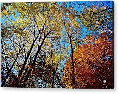 The Canopy Acrylic Print by Daniel Thompson