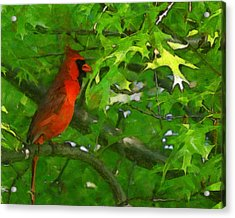 The Cardinal 2 Painterly Acrylic Print by Ernie Echols