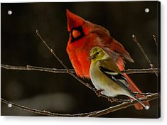 The Cardinal And The Goldfinch Acrylic Print