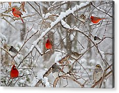 The Cardinal Rules Acrylic Print