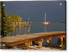 Acrylic Print featuring the photograph The Casual Observer by HH Photography of Florida