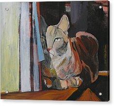 The Cat Acrylic Print by Alicja Coe