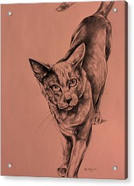 The Cat  Acrylic Print by Derrick Higgins
