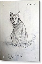 The Cat Acrylic Print by H James Hoff