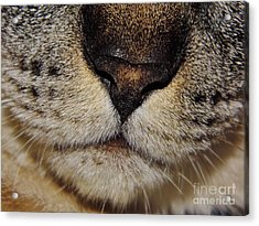The - Cat - Nose Acrylic Print by D Hackett