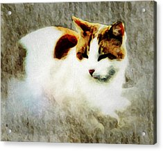 Acrylic Print featuring the digital art The Cat by Persephone Artworks