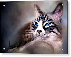 The Cat Acrylic Print by Robert Smith