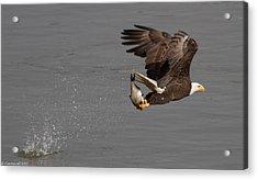 The Catch  Acrylic Print by Glenn Lawrence