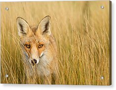 The Catcher In The Grass Acrylic Print by Roeselien Raimond