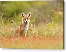 The Catcher In The Sorrel Acrylic Print by Roeselien Raimond