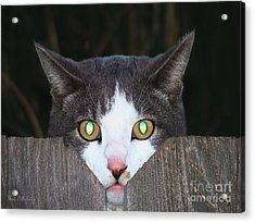 The Cat's Meow Acrylic Print