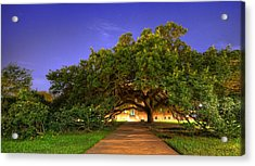 The Century Tree Acrylic Print by David Morefield