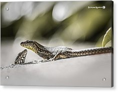 Acrylic Print featuring the photograph The Charming Lizards by Stwayne Keubrick