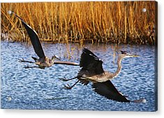 The Chase - # 22 Acrylic Print by Paulette Thomas